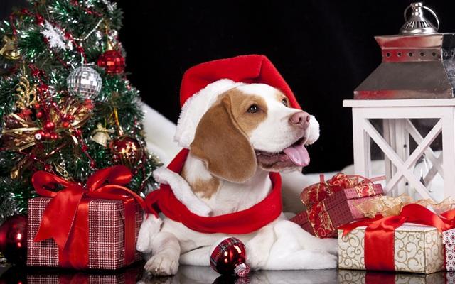 Новый год 2018 –  какие сюрпризы ждать от Собаки?